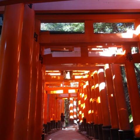 Kyoto Fushimi Inari Taisha Grand Shrine Torii Gates