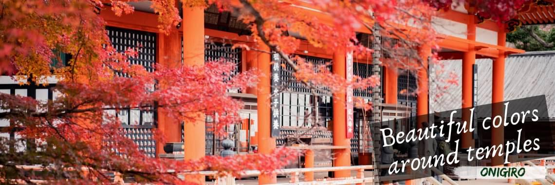 Autumn 3 Onigiro Desktop Header