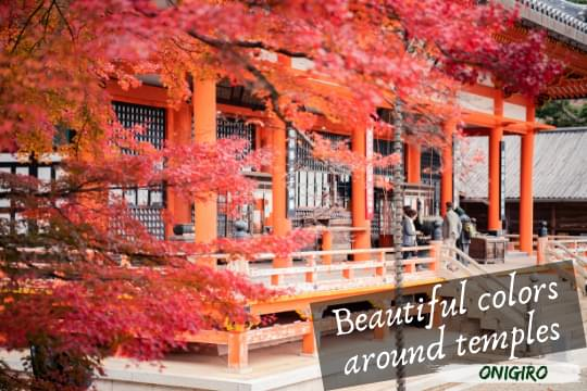 Autumn 3 Onigiro Mobile Header